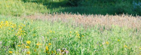 Roosevelt's Schaumburg campus features a grass prairie. Photo Credit: MaryBeth Radeck